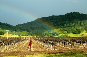 vineyard-rainbow2